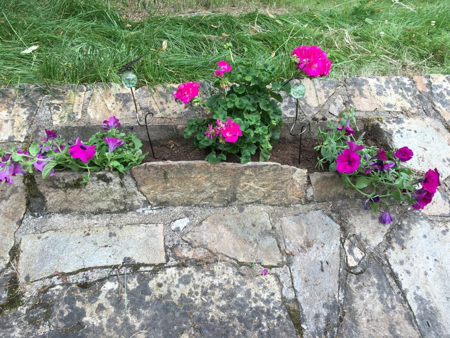 Flowers at the front of the gite farmhouse